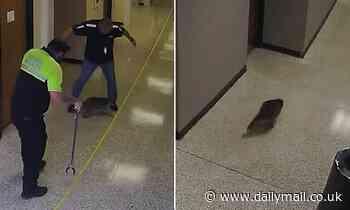 Raccoon caught on camera running wild through hallways of high school in Texas