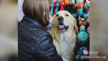 Heaven Can Wait introduces Calgary to an adorable adoptable