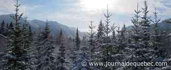 Un hiver différent dans le Parc national de la Gaspésie