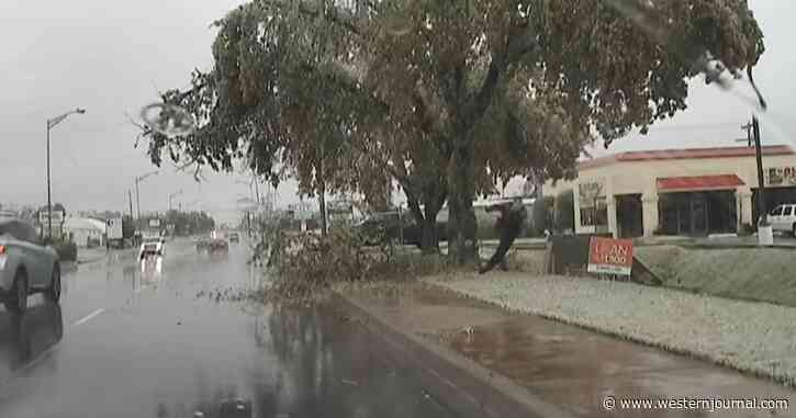 Caught on Video: Police Officer Loses Epic Battle with Tree Limb