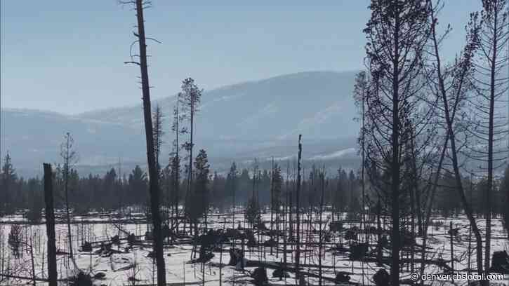East Troublesome Fire: A Look At Damage In Rocky Mountain National Park