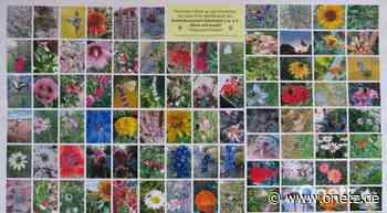 Fotowettbewerb des Gartenbauvereins Edelsfeld findet große Resonanz - Onetz.de