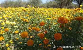 Invitan en Miguel Auza a consumir flores locales - NTR Zacatecas .com