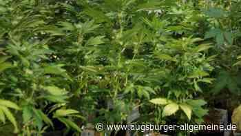 Polizei durchsucht Wohnung in Erdweg und findet Marihuanapflanzen - Augsburger Allgemeine