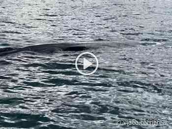 Isola d'Elba, due balenottere avvistate a Portoferraio - Corriere TV