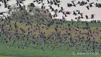 Minister: Grund zur Sorge: Geflügelpest in Norddeutschland aufgetreten