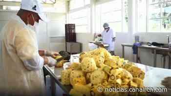 Una fruta es el motor de la paz en La Montañita - Noticias RCN
