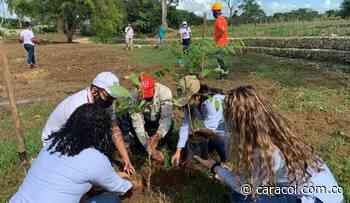 Siembran 500 árboles en Mahates, Bolívar - Caracol Radio