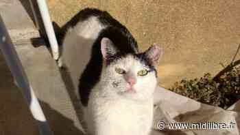 Castries Cats a déjà fait stériliser 230 chats - Midi Libre