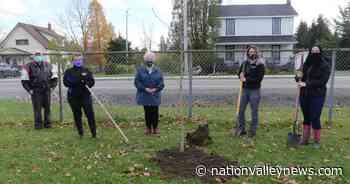Butternut trees start Chesterville Ag Society's planned arboretum - Nation Valley News