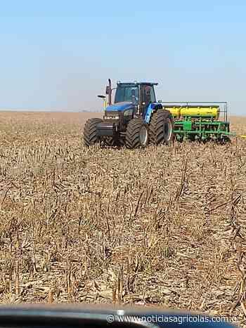 Campo Novo do Parecis (MT) segue com déficit hídrico e terá replantio de soja - Notícias Agrícolas