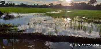 Agricultores de Tamalameque perdieron cosechas de arroz y palma tras ola invernal - ElPilón.com.co