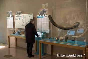 Visite adulte : sur les pas d'un géant Musée Archéa,Louvres Louvres - Unidivers
