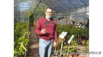 Cotignola diventata terra per agrumi di tutti i tipi - il Resto del Carlino