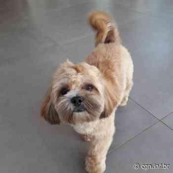 Cachorro perdido é resgatado na Rua Visconde do Rio Branco - CGN