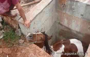 Cavalo é resgatado de buraco em Cachoeiro de Itapemirim - A Gazeta ES