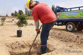 La Libertad: arborizan zona utilizada como botadero informal en Santiago de Cao - Agencia Andina