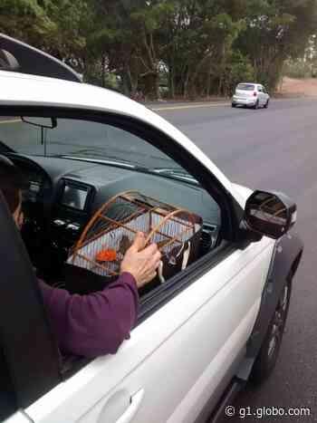 Mulher é detida suspeita de manter ave silvestre em cativeiro em Angatuba - G1
