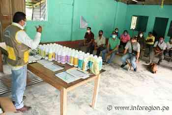 Distribuyen fertilizantes a cacaoteros en Tingo María - INFOREGION
