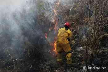 Carhuaz: incendio forestal afecta 10 hectáreas de pastos naturales y arbustos - Agencia Andina