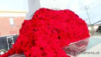 Minnedosa poppy blanket   Watch News Videos Online - Globalnews.ca