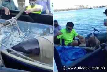 Rescatan delfín varado en los manglares de Puerto Caimito - Día a día