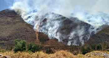 Menor de 11 años acude a sofocar incendio forestal y muere en Cusco - Diario Ojo