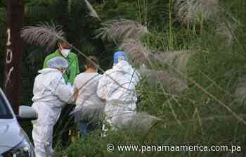 Autoridades exhuman los restos del hombre descuartizado en el Majagual, Veracruz - Panamá América