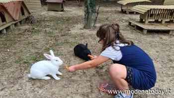 Abbandono di gatti e conigli? Formigine firma la delibera per la cura e tutela delle colonie feline - ModenaToday