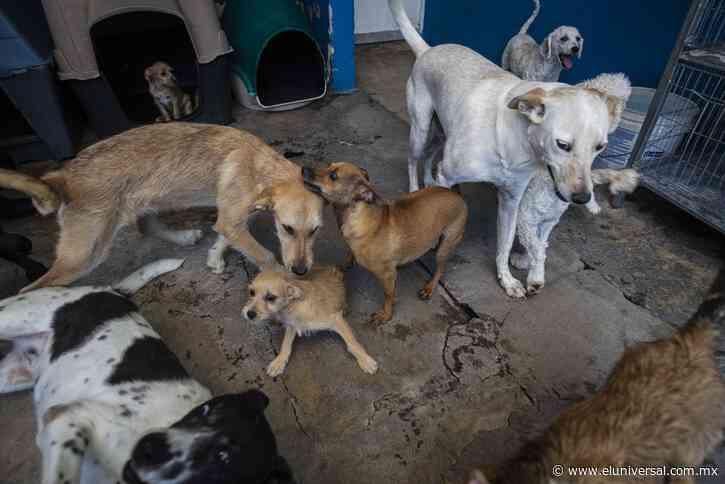 Investigan posible maltrato de perros en Uruapan   El Universal - El Universal