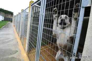 La fourrière animale du Loiret déménagera bientôt à Fay-aux-Loges - La République du Centre