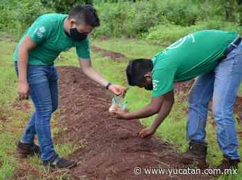 Universitarios de peto buscan la mejor forma de cultivar el cacahuate - El Diario de Yucatán