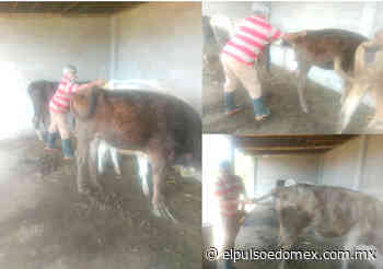 Aplican en Tenancingo vacunas y calcio a animales de corral - El Pulso del Estado de México