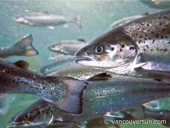 Ottawa plans to move from open-net fish pens to 'sustainable technology' in B.C.