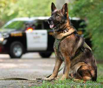 Calendar showcases role of OPP canines
