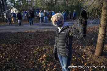 Lambton Shores residents, council square off over gypsy moth action plan - Sarnia Observer