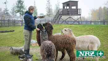 Kamp-Lintfort: Tierpark Kalisto will vor Weihnachten öffnen - NRZ