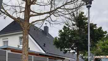 Wieder Bäume in Lohfelden angebohrt: Gemeinde ist auf der Suche nach Zeugen - HNA.de