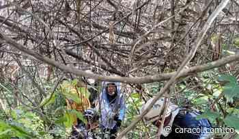 Ataque de abejas africanizadas en Carmen de Apicalá en el Tolima - Caracol Radio