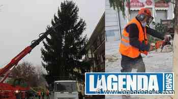 Giaveno: arriva l'albero di Natale per sconfiggere il Coronavirus - http://www.lagendanews.com