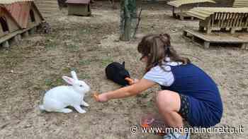 A Formigine maggior tutela per gatti e conigli abbandonati - modenaindiretta.it