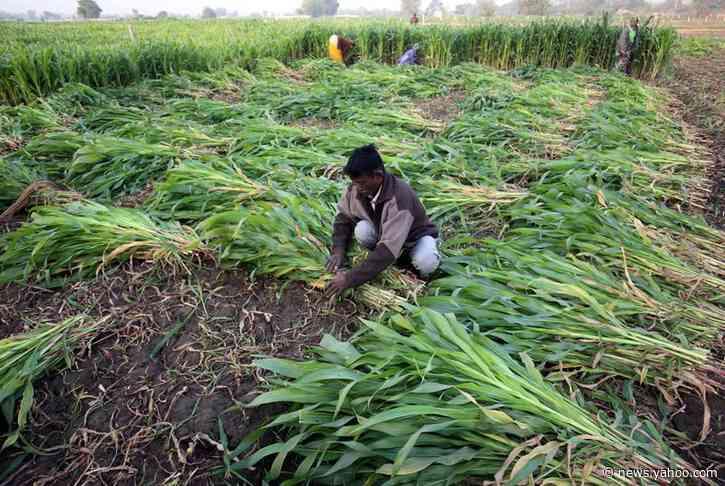 India allocates extra $8.71 billion in fertilizer subsidy