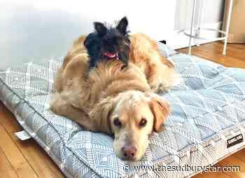 Send us your pet pals pictures