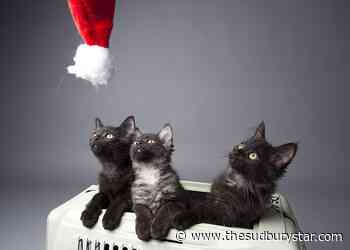 SPCA launches holiday rehoming campaign