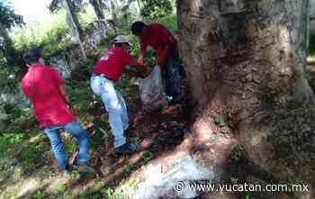 Concluye campaña de descacharrización en Peto - El Diario de Yucatán