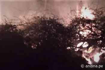 Incendio forestal destruye dos hectáreas de algarrobo y cobertura natural en Jayanca - Agencia Andina