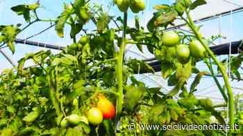 """Scicli: Guglielmo Lorefice e """"Fertiplan"""", da 30 anni in campo per l'agricoltura sostenibile - Scicli Video Notizie"""