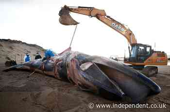 Marine biologists probe mystery illness after spike in whales washed up on French beaches