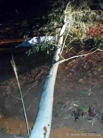 Arroyos y Esteros: Cayó un árbol sobre un hombre y lo mató - Nacionales - ABC Color