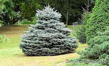 Gemeente zoekt kerstboom